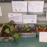 Food from Garden