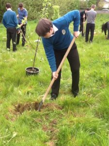 Planting our Native Apple Trees as part of Environment Class.